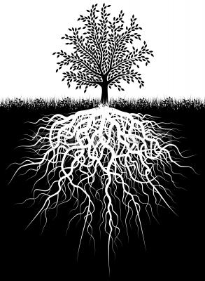 tree_roots