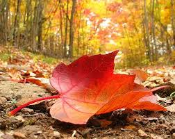 red_leaf_fall