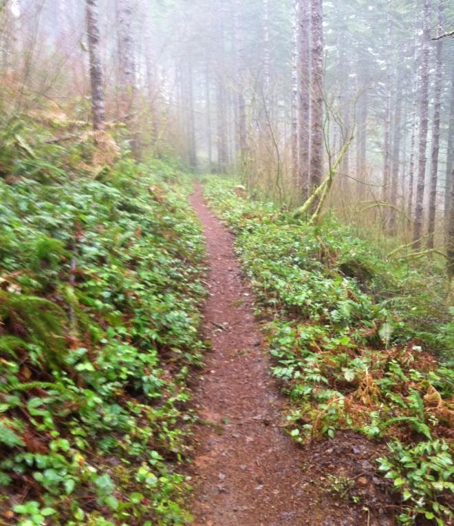 morning_trail_run