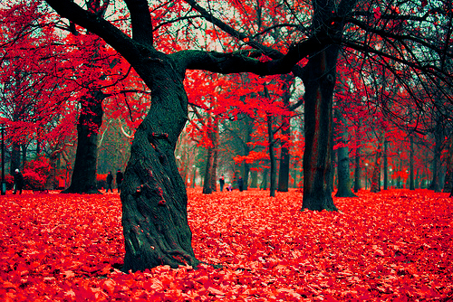 autumn_red